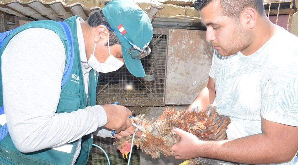 Instituciones se asocian para erradicar Enfermedad de Newcastle del Perú