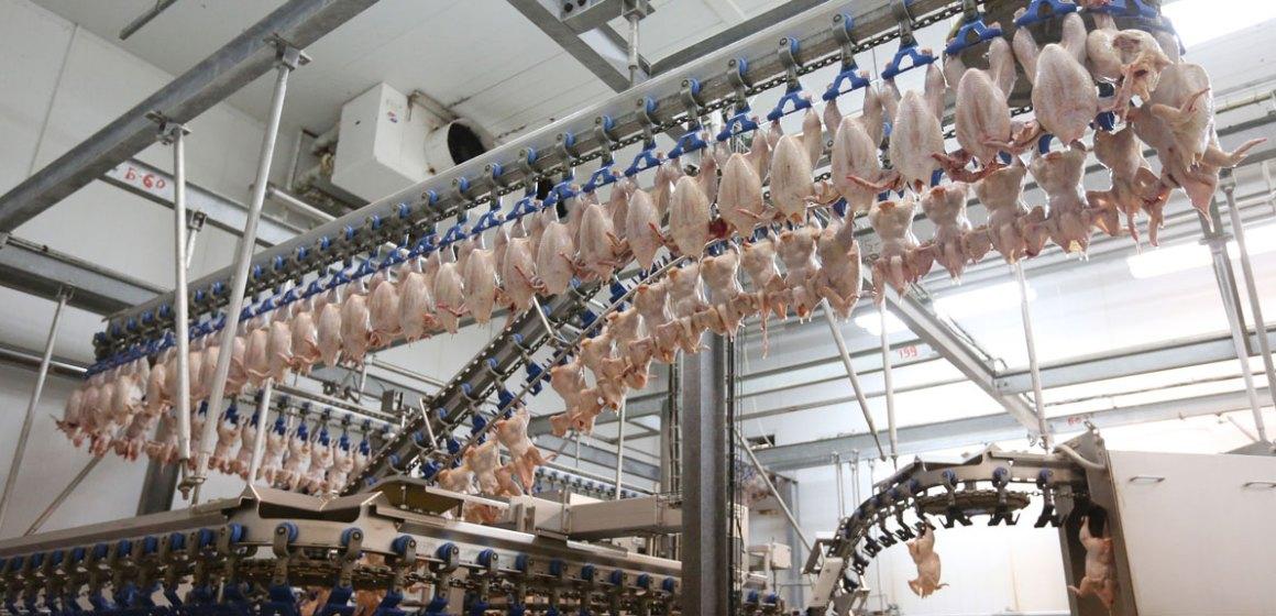 La industria avícola rusa quiere convertirse en un proveedor importante para más países