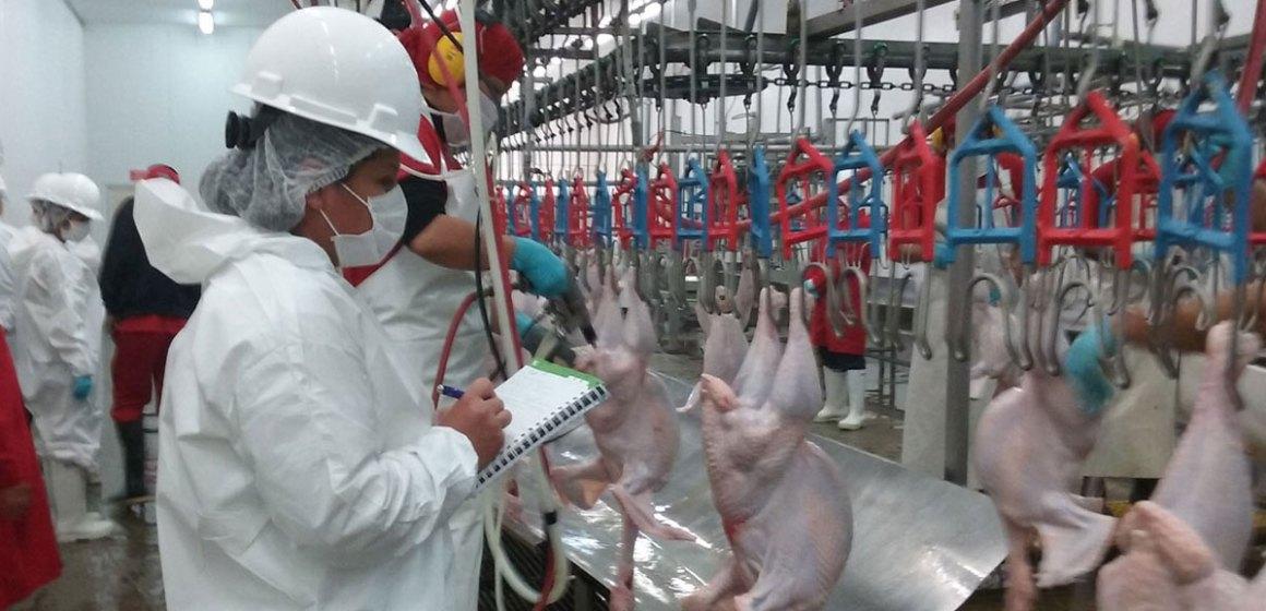 Senasa autorizó nuevo centro de faenamiento avícola en Cusco