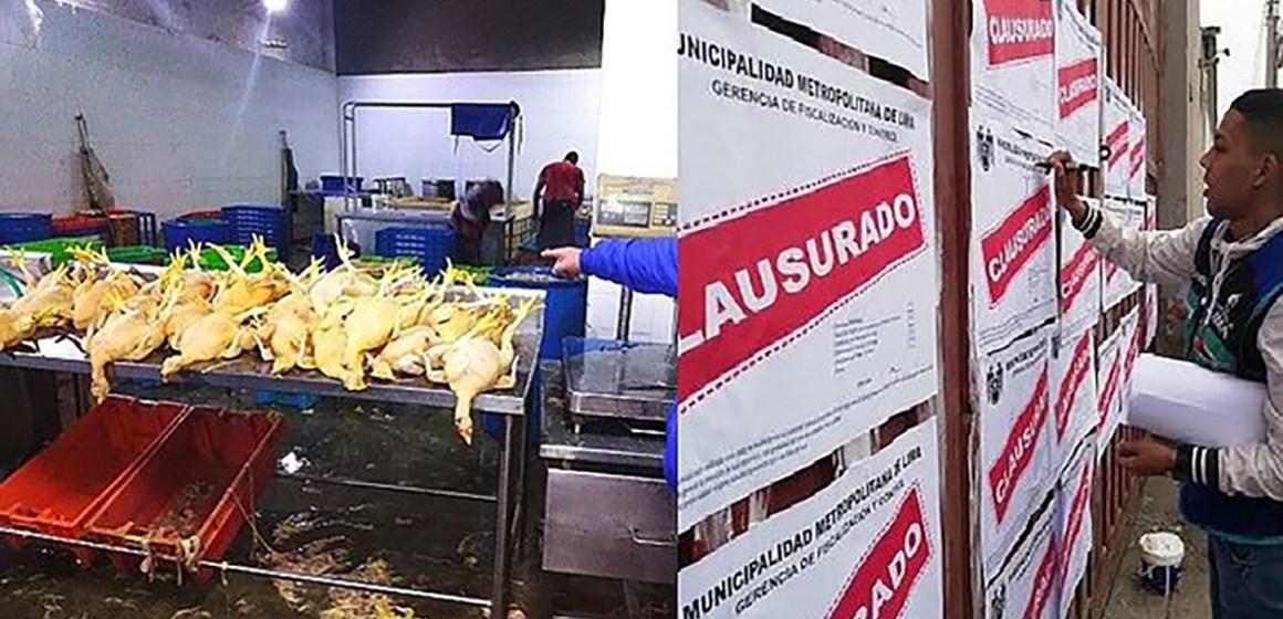 Avícola repartía pollos en condiciones insalubres en principales mercados de Lima
