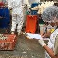 Intervienen y sancionan avícolas clandestinas en Lima