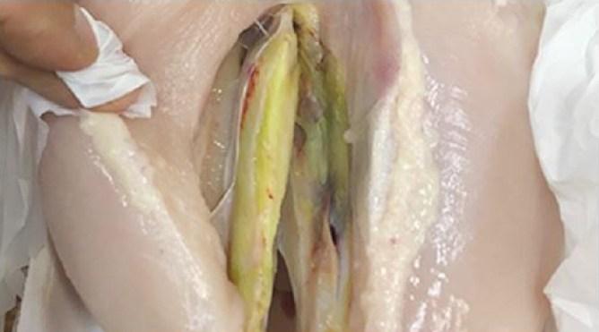 Miopatía del pectoral profundo: categoría 3, filete interior que se torna de color verdoso. Fuente: adaptado de Bilgilie & Hess, 2008.