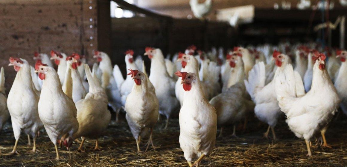 Bolivia también consume pollo