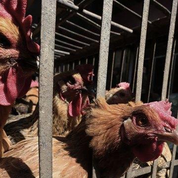 Se reporta caso de infección por la gripe H5N6 en China