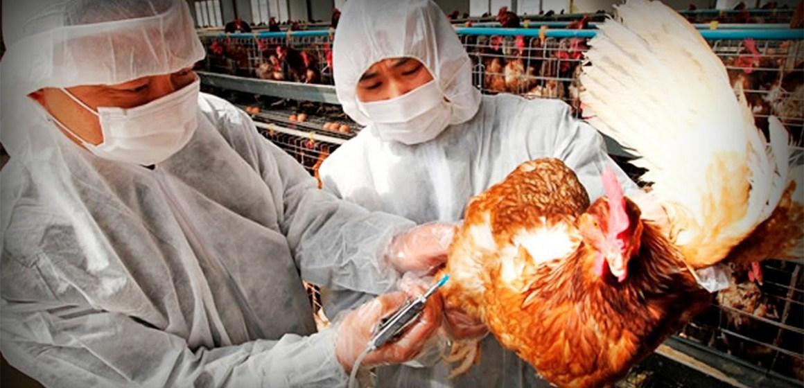 La edición genética podría combatir la gripe aviar