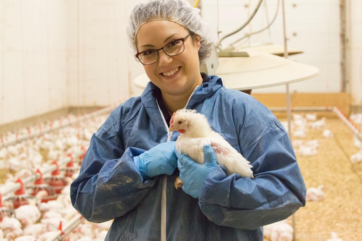 Médico veterinario mujer sosteniendo un pollo de engorde.