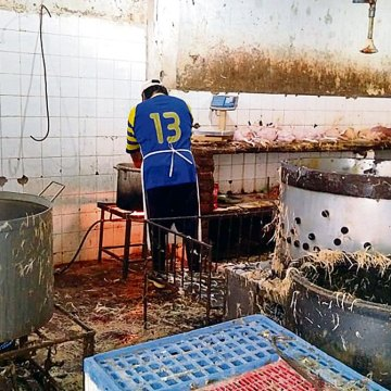 Autoridades clausuraron mataderos informales en Piura