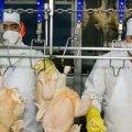 Plan piloto de exportación proyecta el sector avícola