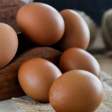 Producción de huevos cae en República Dominicana