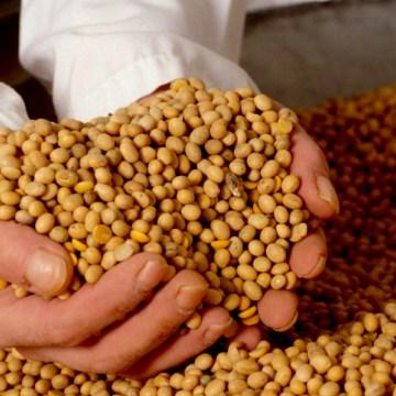 Perú suspende importación de productos agropecuarios de Bolivia