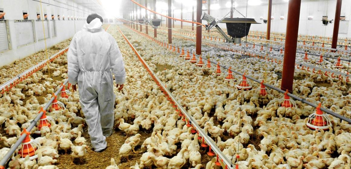 ESAN presenta Gestión de Negocios Avícolas