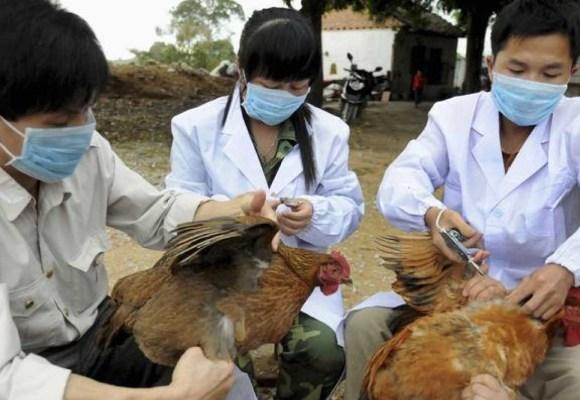 Gripe aviar en Europa: Holanda reajusta su bioseguridad