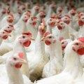 China aprobó importación de productos avícolas de EUA
