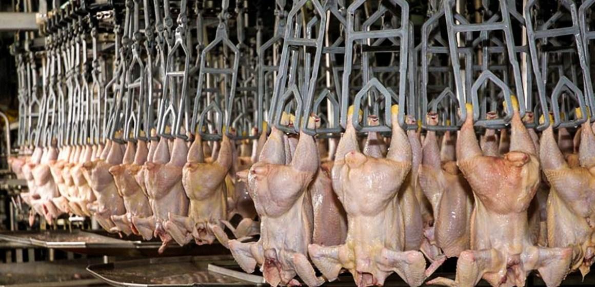 Perú busca exportar pollo a China