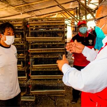 Covid-19: Municipalidad de Lurín entrega 100 sacos de pienso a avicultores