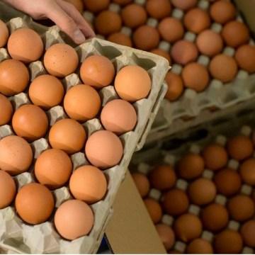 Colombia: se ha incrementado la demanda por el huevo