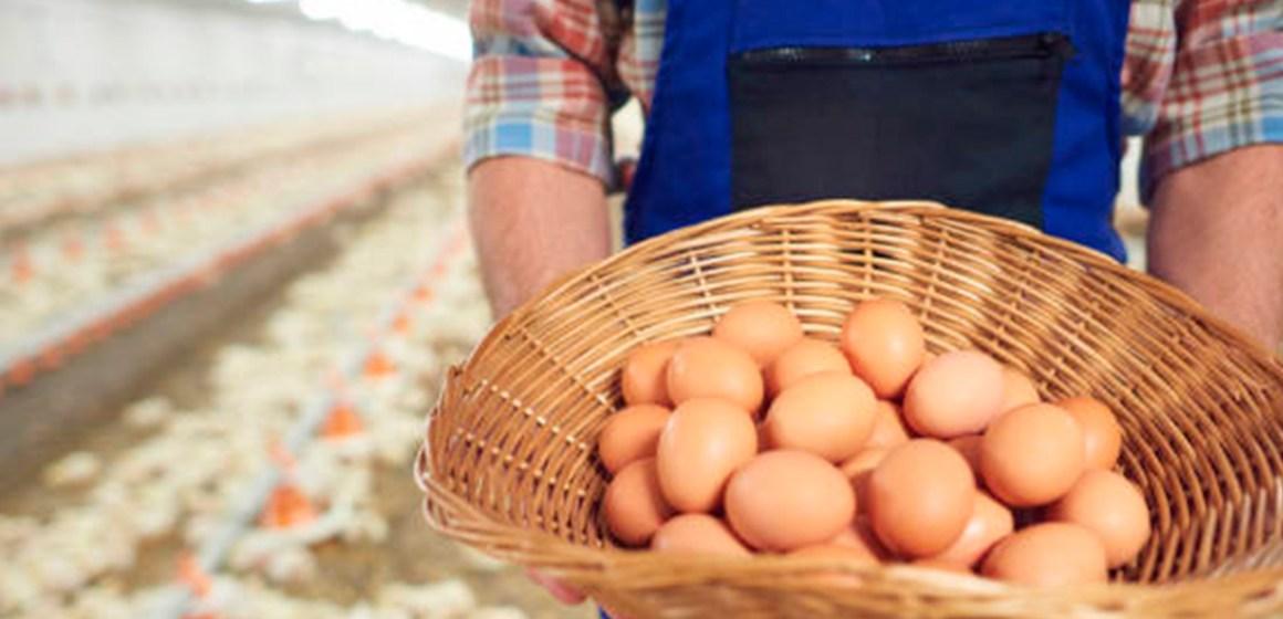 COVID-19 en Perú: señor avicultor cuídese, a su familia y a sus colaboradores
