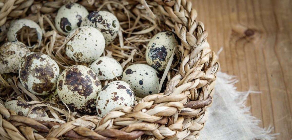 Huevos de codorniz evitan estrés y benefician la salud