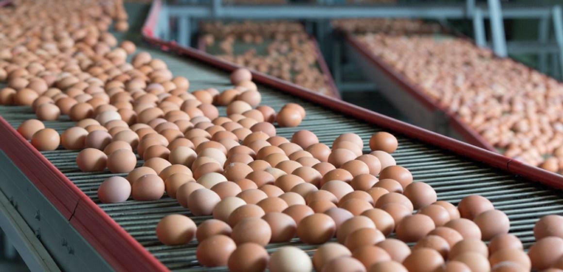 Estados Unidos: precio del huevo se incrementa