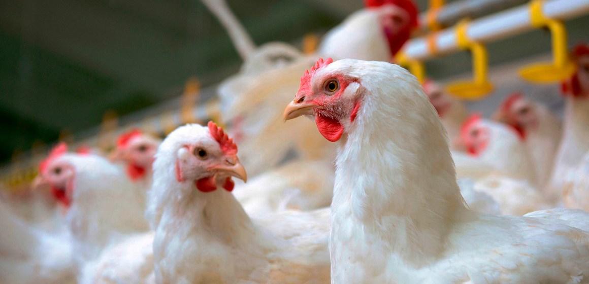 Venta de pollo en Lima supera línea de costos