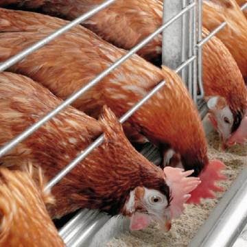 DSM realizó una charla sobre la interacción y procesamiento de las enzimas nutricionales en el alimento de aves