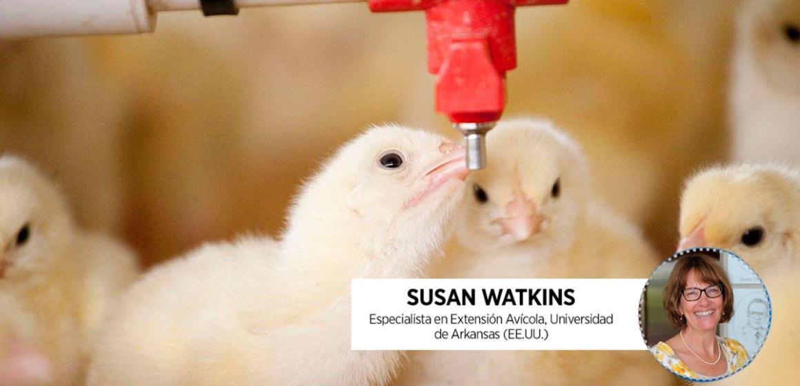 Webinar Aviagen: Importancia de la Calidad del Agua para la Salud y Bienestar de las Aves