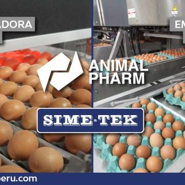 Animal Pharm y Sime-Tek instalan con éxito la primera planta clasificadora y empacadora en Iquitos