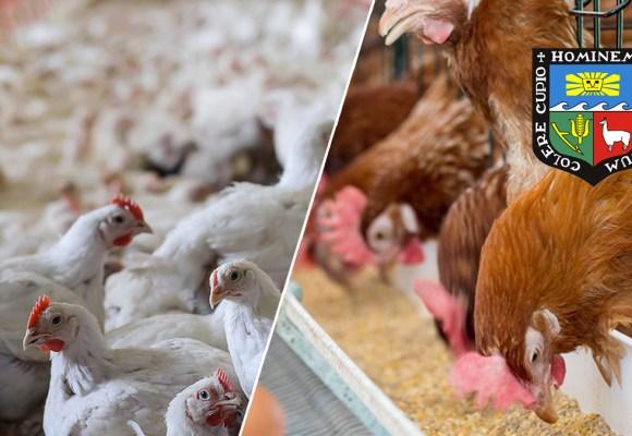 Cursos de Proyección Social del Programa de Aves UNALM – Facultad de Zootecnia