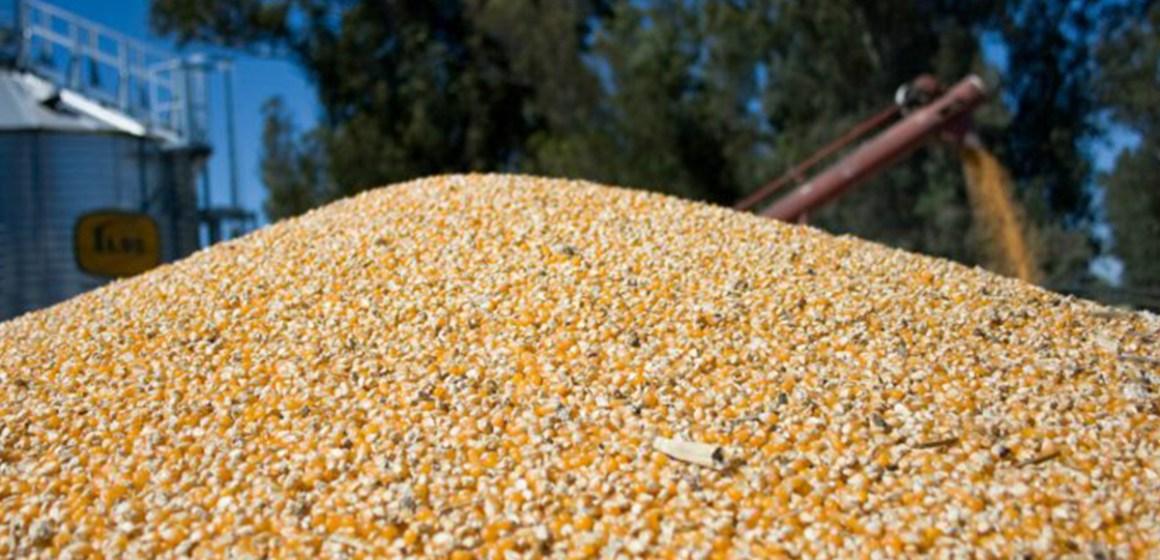 Brasil: disminuye precio del maíz en los últimos días