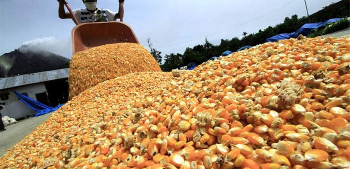 Argentina: maíz disfruta de impulso inesperado por buen clima durante cosecha