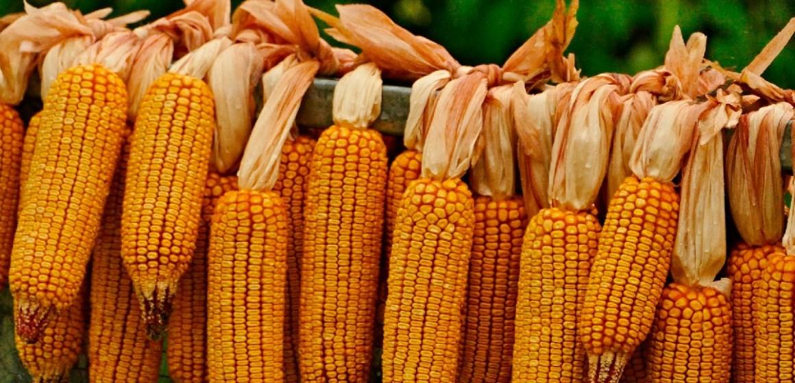 Perú importó 1.8 millones de toneladas de maíz amarillo