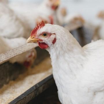 ProAct 360: la nueva proteasa que promueve la producción animal sostenible
