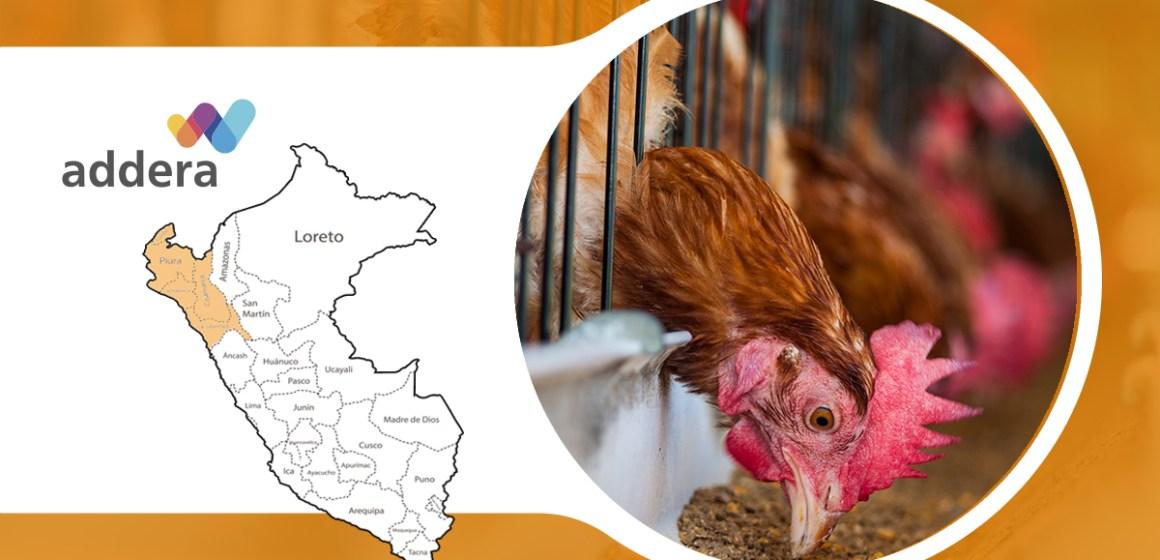 Addera y Tecnavet presentaron alternativas en la nutrición de gallinas ponedoras