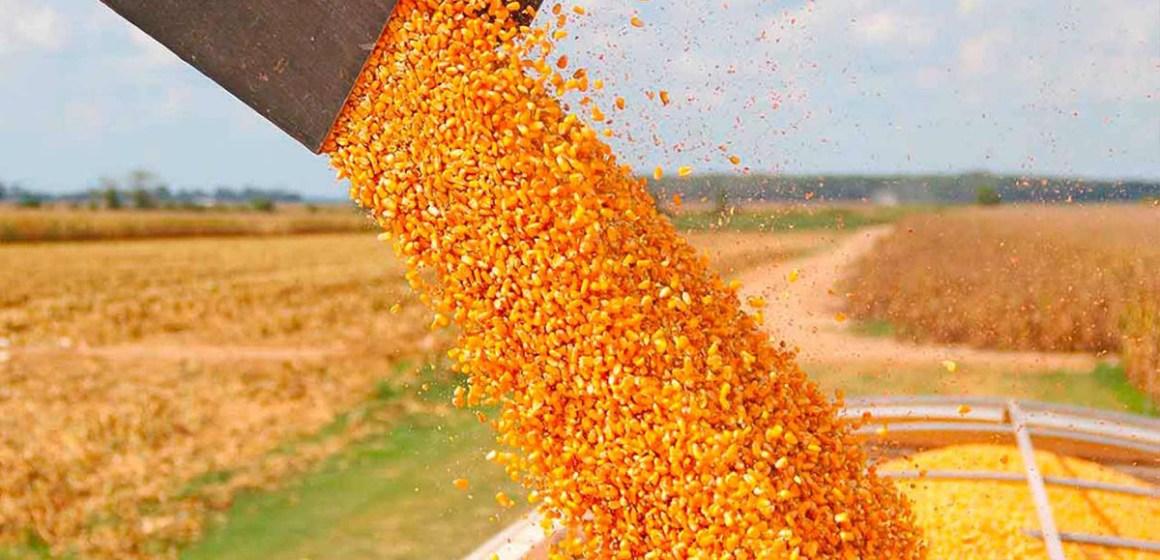 desciende precios de maíz y soja