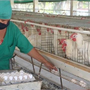 covid 19 en el sector avícola