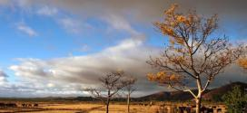 Sécheresse, tempêtes tropicales et criquets : les trois plaies de Madagascar