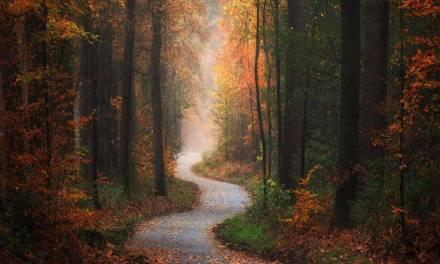 Superbe série d'images d'automne par Albert Dros photography