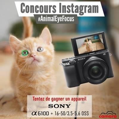 Concours photo Sony/Camara : sur le thème #AnimalEyeFocus