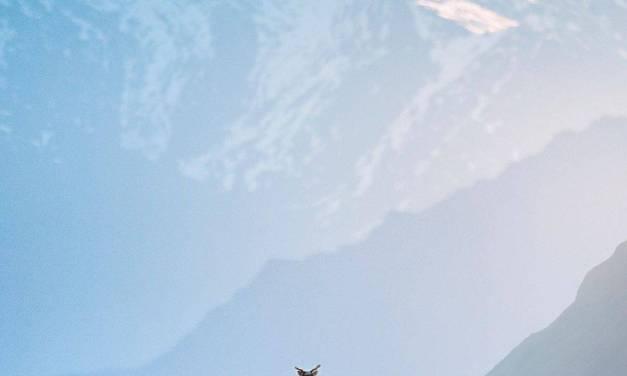 La chaîne de Brooks en Alaska et un caribou