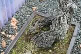 Bonsai san 17 - quercus - chêne