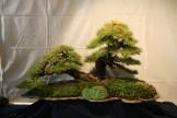 selection régionale EST 2012 - bonsai mélèze sur lauze 1