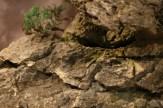 selection régionale EST 2012 - bonsai paysage 2