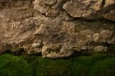 selection régionale EST 2012 - bonsai paysage 3