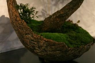 selection régionale EST 2012 - bonsai picea 3
