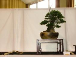 selection rhone alpes bonsai 2012 07