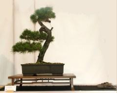 selection rhone alpes bonsai 2012 08