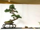 selection rhone alpes bonsai 2012 09