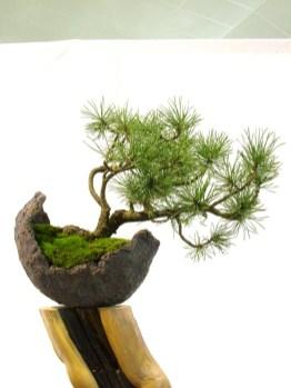 selection rhone alpes bonsai 2012 105