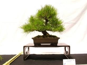 selection rhone alpes bonsai 2012 118