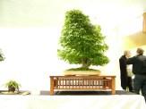 selection rhone alpes bonsai 2012 14